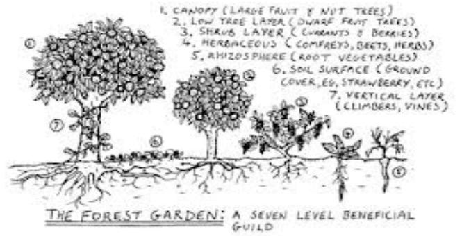 forest-garden-layers