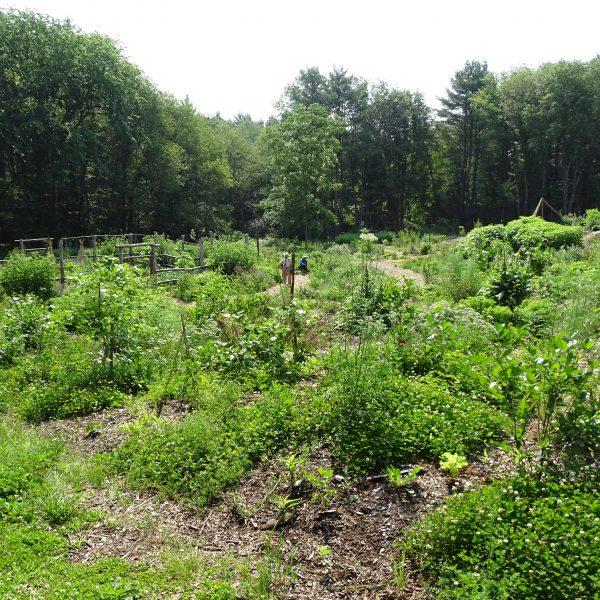 ifarm garden