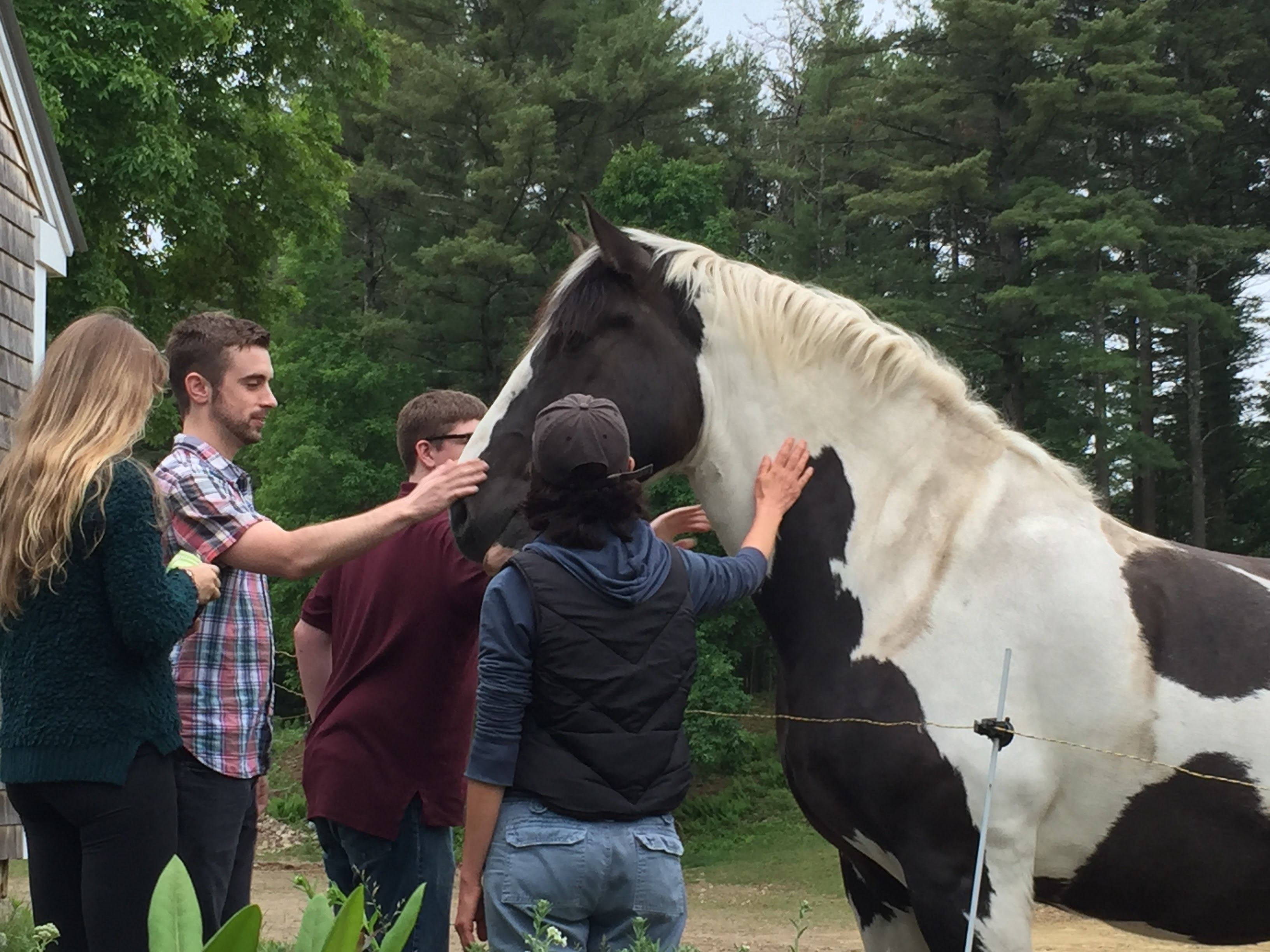 Photo of Patch, our draft horse, as part of a farm-education program.