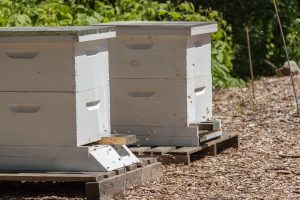 bees beehives ifarm permaculture organic