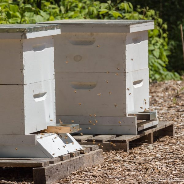 The ifarm beehives