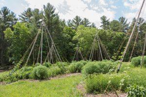 Permaculture Hops Organic Garden