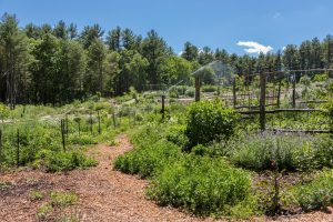 image of ifarm permaculture garden