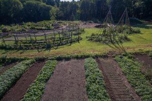 Our new garden, alongside the hops