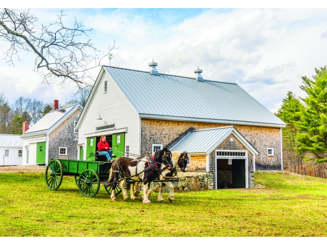 Two spotted draft horses pulling a hay wagon