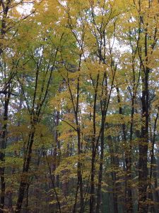 Fall colors on the Towne trails