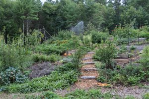 Local farm garden with winding stair and many different plants