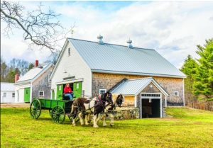 Photo of Pitch and Patch, our draft horses, pulling a cart in front of our restored barn.