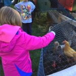 Farm-Based Education: A young girl meeting chickens