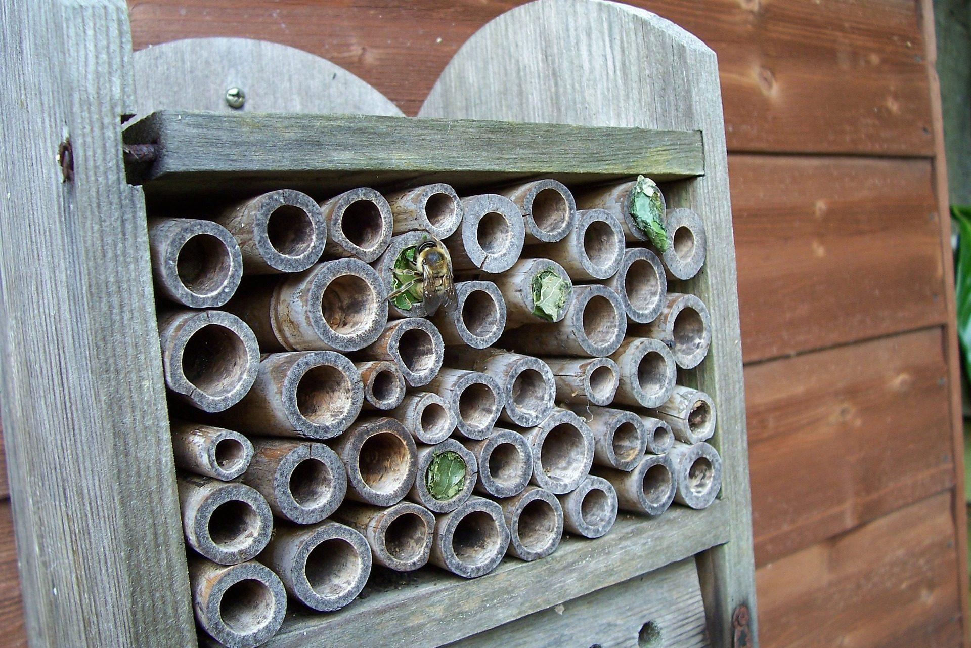 Wooden Bee Hotel