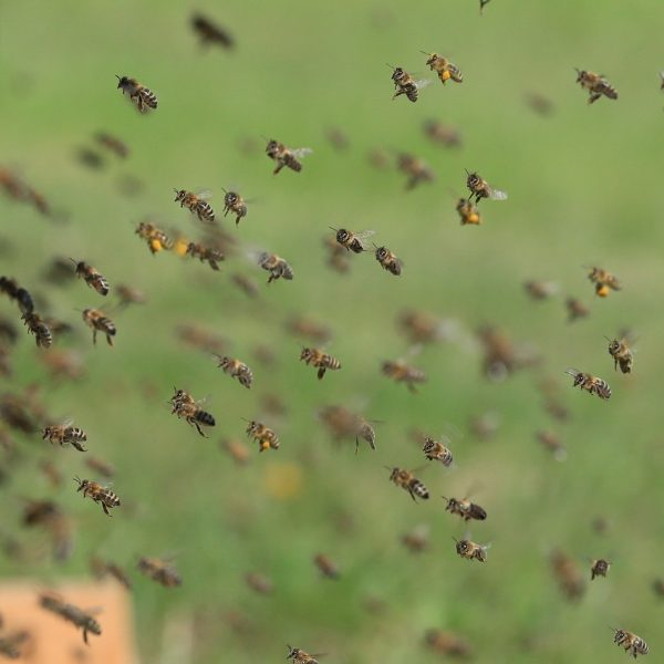 bees-1975820_1280