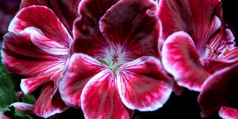 flower-670401_960_720